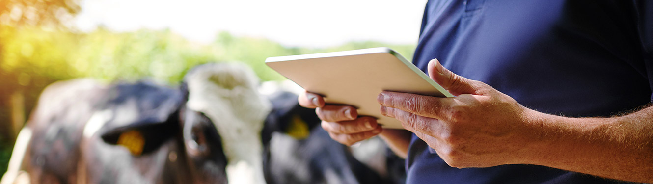 Farmer using smart tablet